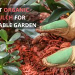 Best Organic Mulch for Vegetable Garden [Top 7 Reviewed]