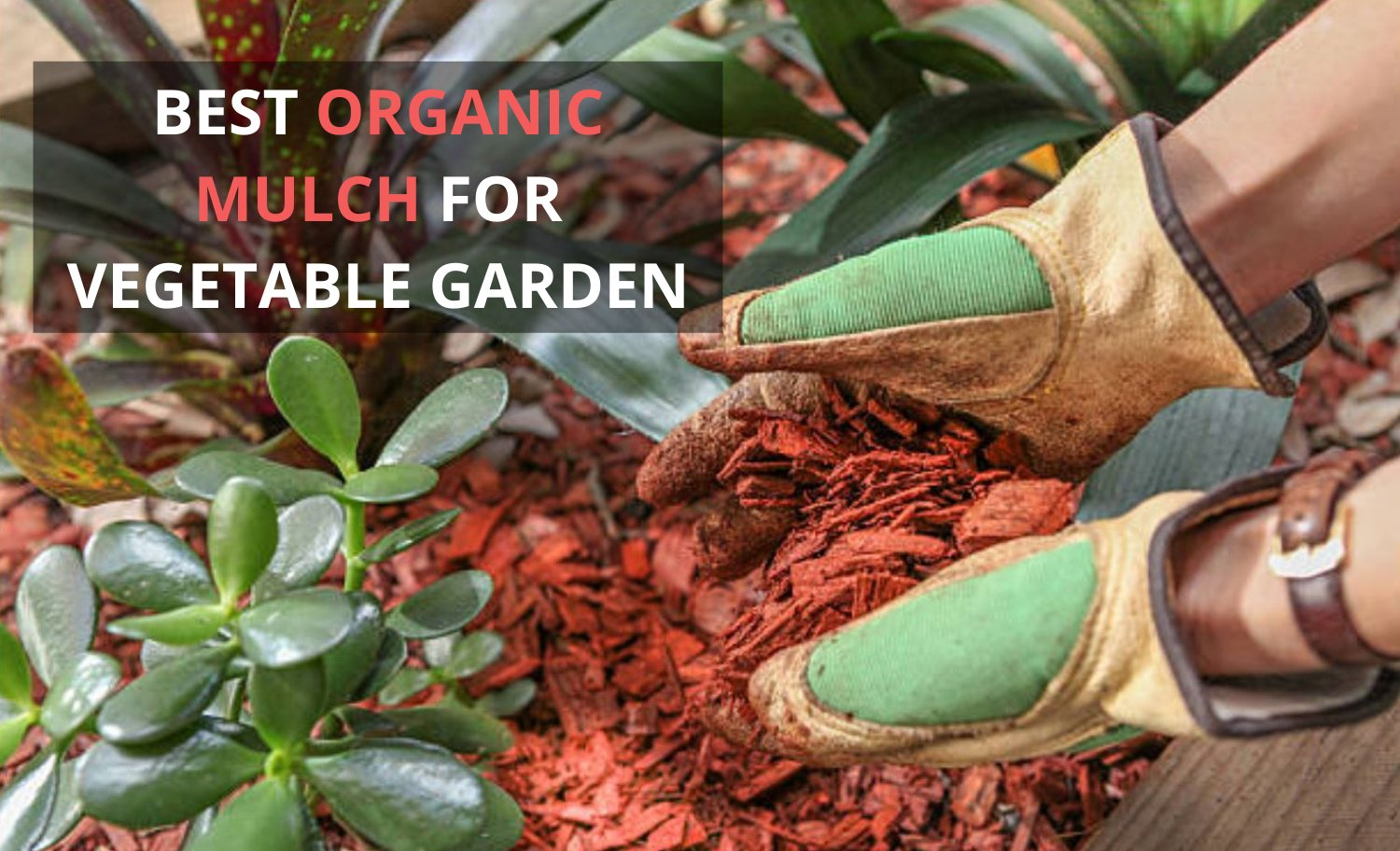 Best Organic Mulch for Vegetable Garden