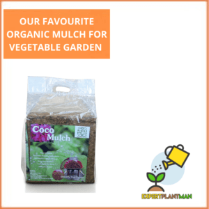 OUR FAVOURITE ORGANIC MULCH FOR VEGETABLE GARDEN
